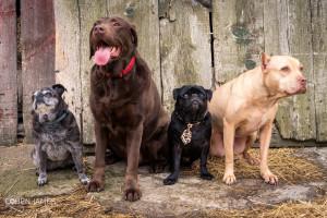 Jess' Dog Group 1